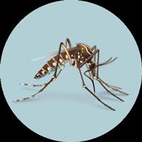 mosquito-circ