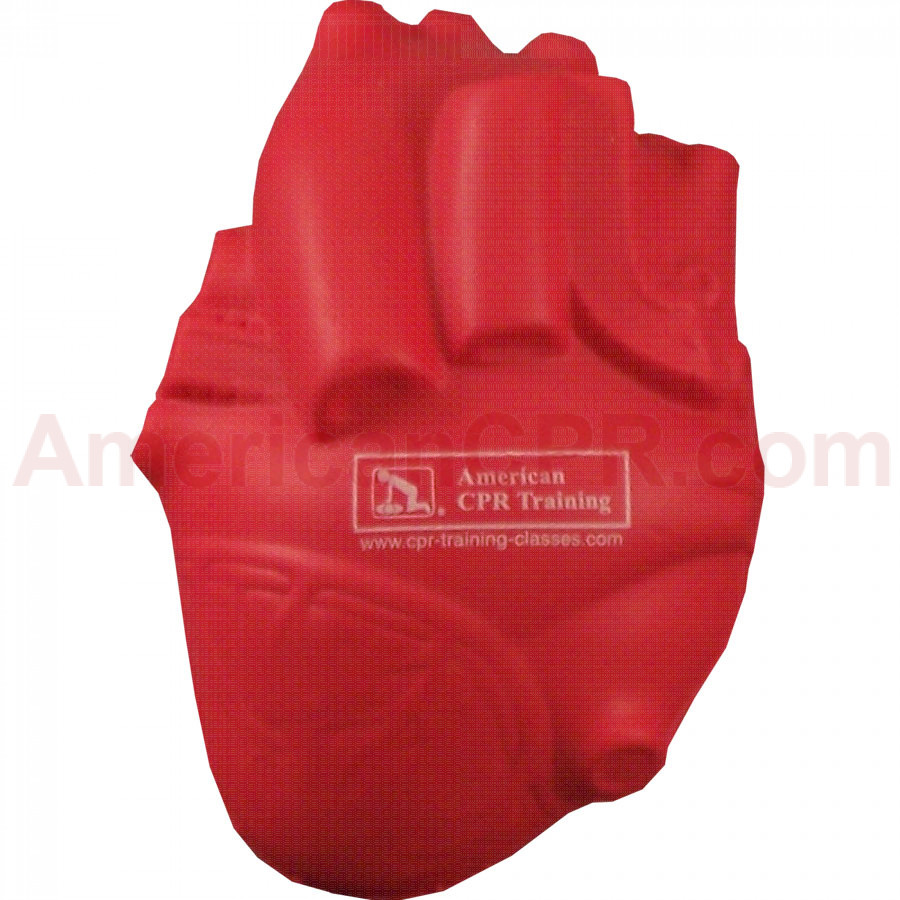 American Cpr Training Aehs Foam Anatomical Heart American Cpr