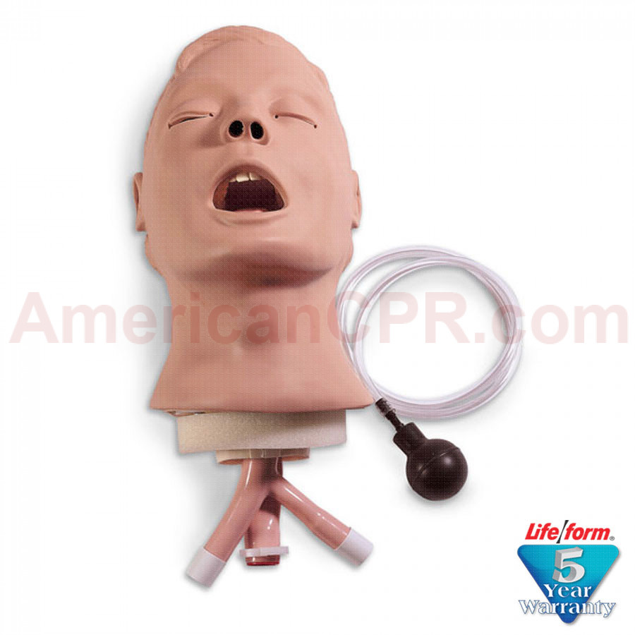 Adult Airway Management Trainer Head - LifeForm