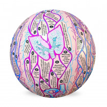 Human Anatomy Clever Catch Ball - Simulaids