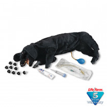 Life/form Basic Sanitary CPR Dog - LifeForm