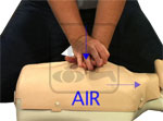 Student practicing chest compressions on a CPR Manikin