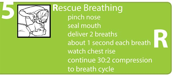 Rescue Breathing, pinch nose, seal mouth, deliver 2 breaths, about 1 second each breath, watch chest rise, continue 30:2 compression to breath cycle